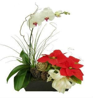 Arreglo Florales Navideños