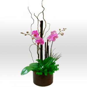Orquidea Rosa en Maceta