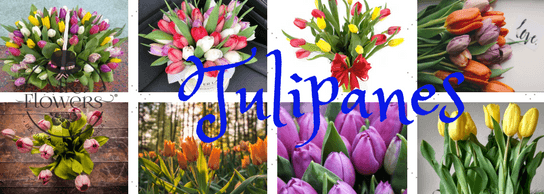 Tulipanes Mr Flowers