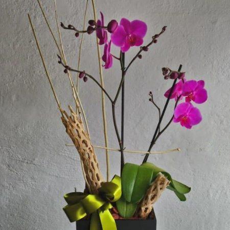 Orquídea Rosa Claro
