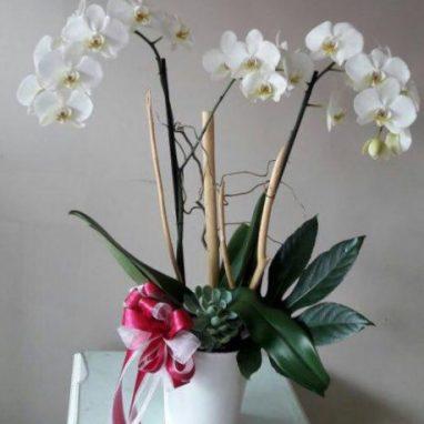 Orquídea Blanca 2 Varas