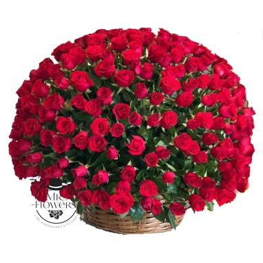 300 rosas en canasta
