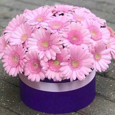 Caja con 30 Gerberas Rosas