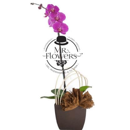 Orquídea de un Tallo