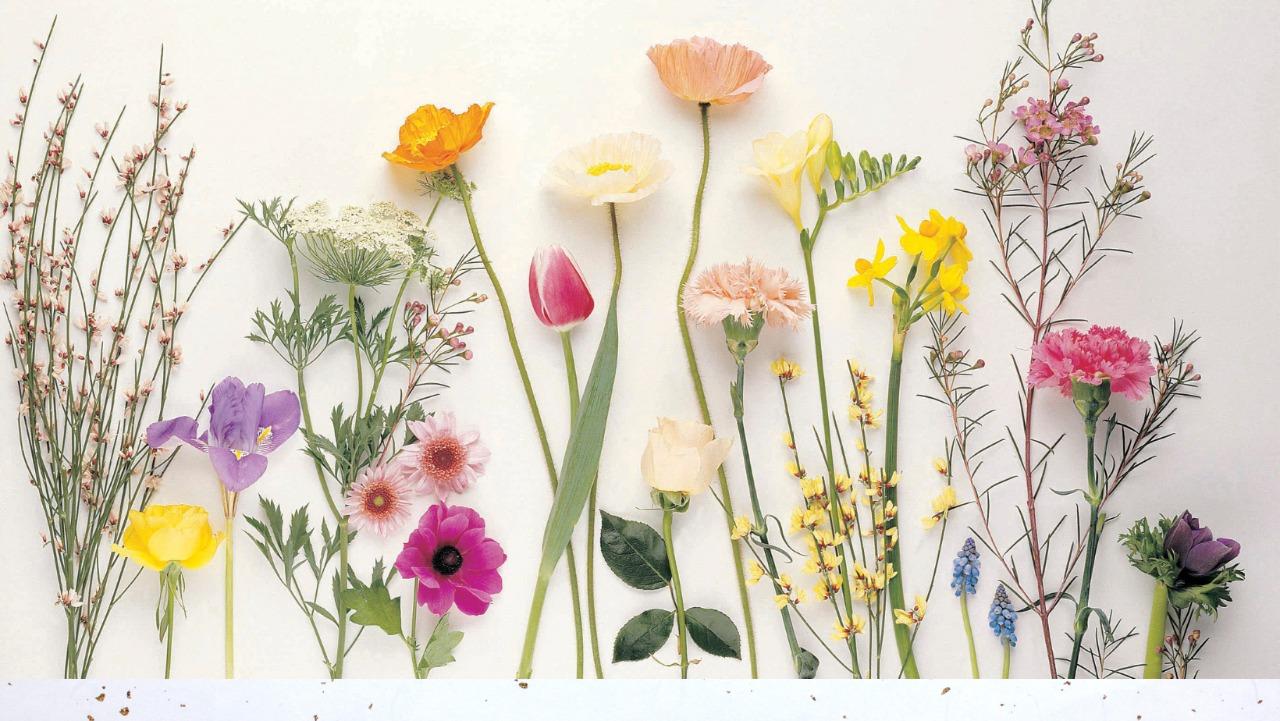 Las personalidades de las Flores